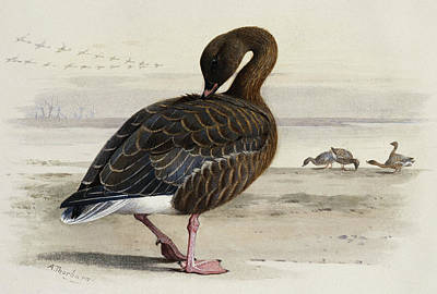 Geese Painting - A Pink Footed Goose by Archibald Thorburn