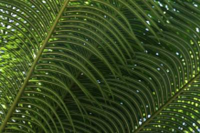 Photograph - A Pixelated Fern Experience by Hany J