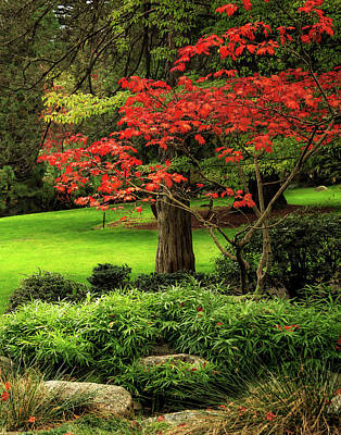Photograph - A Place In Lithia Park by James Eddy