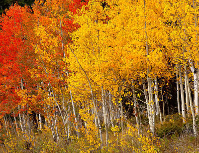 A Place In The Aspen Forest Art Print by Tim Reaves