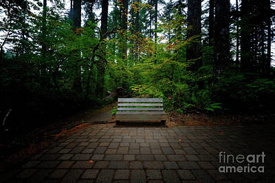 Photograph - A Place To Sit And Ponder by Steve Triplett