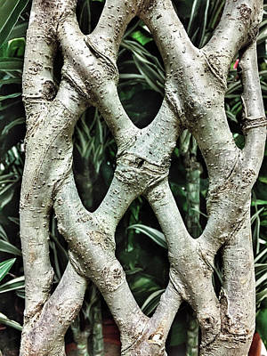 Ficus Photograph - A Plant Trunk by Tom Gowanlock