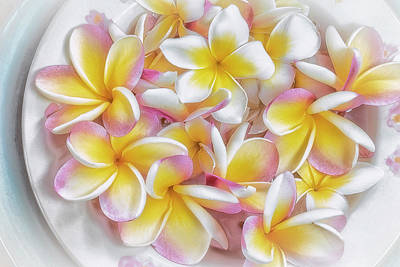 Photograph - A Plate Of Plumerias by Jade Moon