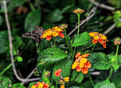 Photograph - A Pollen Eater by Lewis Mann