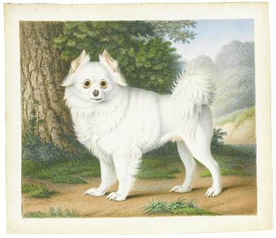 Dog In Landscape Painting - A Pomeranian In A Landscape by MotionAge Designs