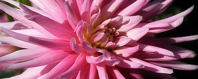 Photograph - A Pop Of Pink by Bruce Bley