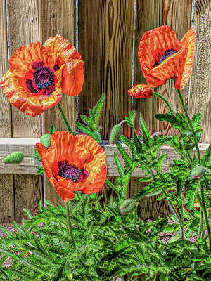 Photograph - A Pop Of Poppies by Leslie Montgomery