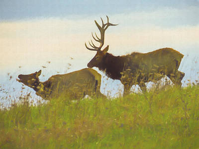 Photograph - A Portrait Of A Large Bull Elk Following A Cow,rutting Season. by Rusty R Smith