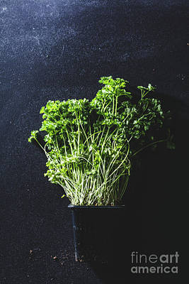 Photograph - A Pot Of Parsley On A Black Kitchen Counter. by Michal Bednarek