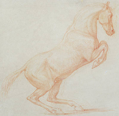 Red Line Drawing - A Prancing Horse by George Stubbs