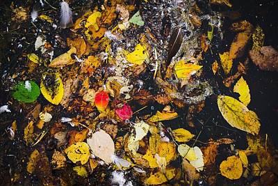 Photograph - A Pretty Mess No.1 by Desmond Raymond