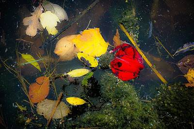 Photograph - A Pretty Mess No.2 by Desmond Raymond