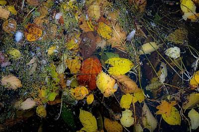 Photograph - A Pretty Mess No.3 by Desmond Raymond