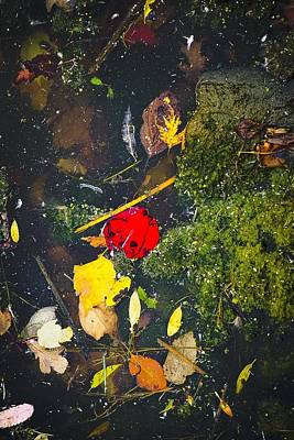 Photograph - A Pretty Mess No.4 by Desmond Raymond