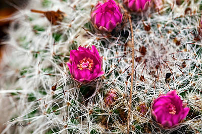 Photograph - A Prickly Bed by Christopher Holmes