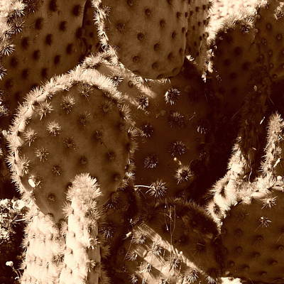 Photograph - A Prickly Situation by Bill Tomsa