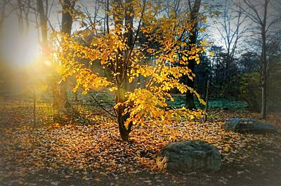 Photograph - A Promise Of Autumn by Diana Angstadt