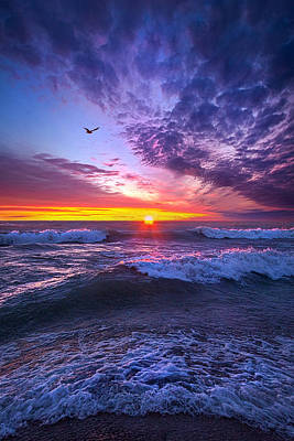 Photograph - A Promise Of The Future by Phil Koch