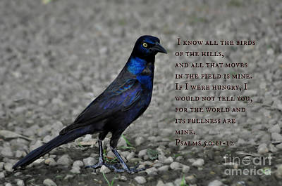 Photograph - A Psalm And The Blackbird by Eric Liller