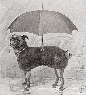 A Pug Wearing Boots, Coat And Umbrella Art Print by Vintage Design Pics