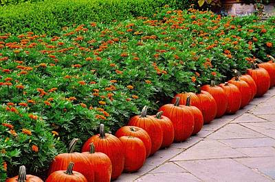Photograph - A Pumpkin Lane by Diana Mary Sharpton