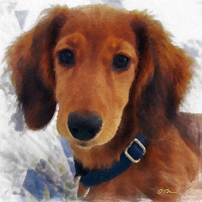 Dachshund Digital Art - A Puppy Called Redford by Claudia O'Brien