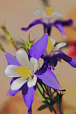 Photograph - A Purple Columbine Blossom. by Rusty R Smith
