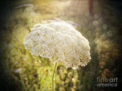 Photograph - A Queen's Morning by Maria Urso