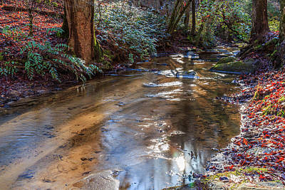 Photograph - A Quiet Creek by Doug Camara