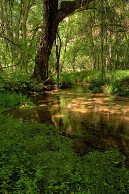 Photograph - A Quiet Place by Sue Cullumber