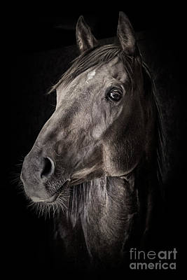 Photograph - A Race Horse Named River by Brad Allen Fine Art