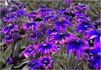 Photograph - A Rainbow Of Daisies by Wayne King