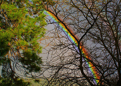 Photograph - A Rainbow Tree by Ben Upham III