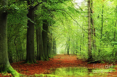 Hjbh Photograph - A Rainy Day In The Forest by LHJB Photography