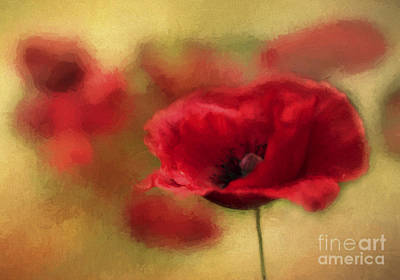 Garden Petal Image Photograph - A Red Poppy by Darren Fisher