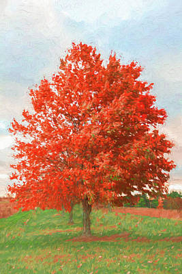 A Red Tree Art Print by Jeff Oates Photography
