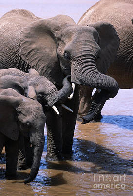 Elephant Photograph - A Refreshing Moment by Sandra Bronstein
