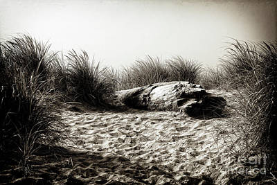 Photograph - A Resting Place On The Dune by Lincoln Rogers