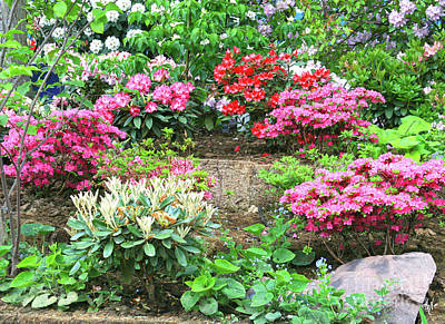 Photograph - A Rhapsody Of Rhododendrons by Victoria Harrington