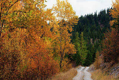 Photograph - A Road Less Traveled by Laurie Pelham