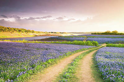 Landscape Photograph - A Road To Bluebonnet Heaven by Ellie Teramoto