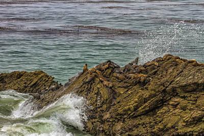Photograph - Resting Seals by Robert Hebert
