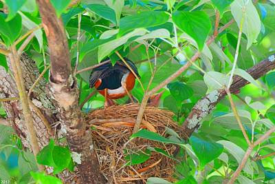 Photograph - A Robin Feeding Her Young by Lisa Wooten