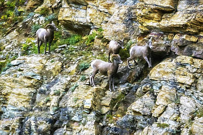 Photograph - A Rocky Climb by Belinda Greb