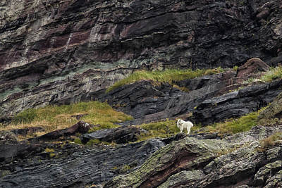 Photograph - A Rocky Landscape And A Mountain Goat No. 1 by Belinda Greb