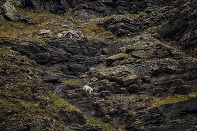 Photograph - A Rocky Landscape And A Mountain Goat No. 2 by Belinda Greb