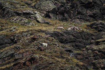 Photograph - A Rocky Landscape And A Mountain Goat No. 3 by Belinda Greb