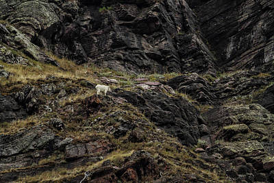 Photograph - A Rocky Landscape And A Mountain Goat No. 5 by Belinda Greb