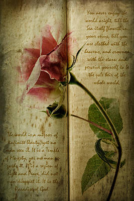 A Rose Print by Ann Garrett