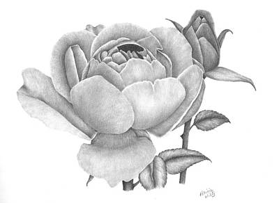 Drawing - A Rose Bloom by Patricia Hiltz